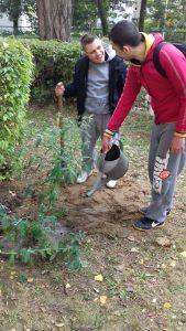 sadzenie-drzew2_resize