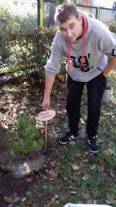 sadzenie-drzew3_resize
