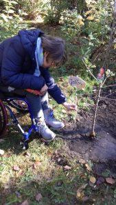 sadzenie-drzew5_resize