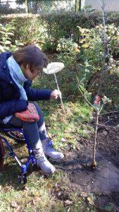 sadzenie-drzew6_resize