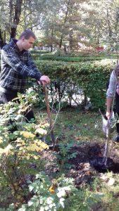 sadzenie-drzew9_resize